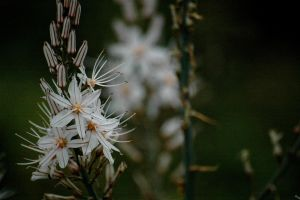 White Flower by Tunaoktay