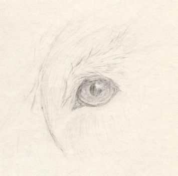 Closeup of a Griffin Eye by Imbecamiel