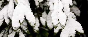 Frosted Flora by rclee21
