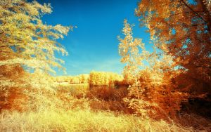 Yellow Trees Part III by myINQI