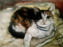 Cat Honey pastel drawing by mona-croll
