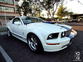 The White Stallion by Swanee3