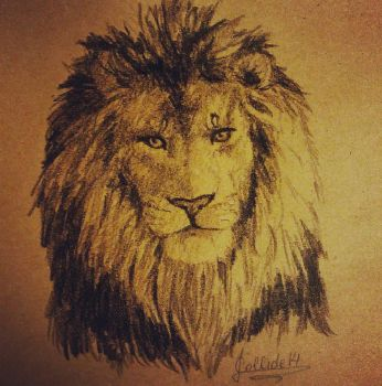 Lion by CoLLiDE14