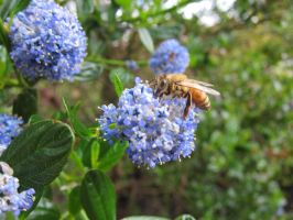 March on Worker Bees by Lafire
