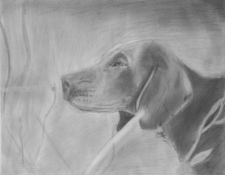 German Shorthaired Pointer by Jay513