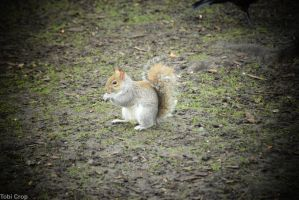 Tiny Squirrel  with seeds by slayer500