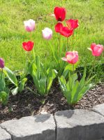 Tulips part two by MargravesEternity