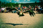 approching vulture by Goethesphoto