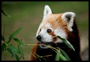 but, this bamboo is mine ... by morho