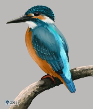 Common kingfisher by krikra