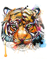 Brilliant Bengal Tiger by FinchFight