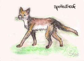 Drawing : Spottedleaf by Espenfluss