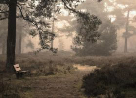 foggy forest by LaMusaTriste