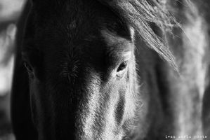 Into the eyes by ivancoric