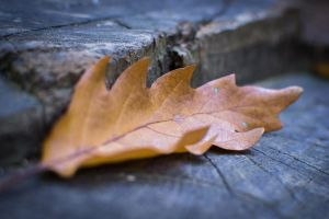 Signs of Autumn by PJohnny