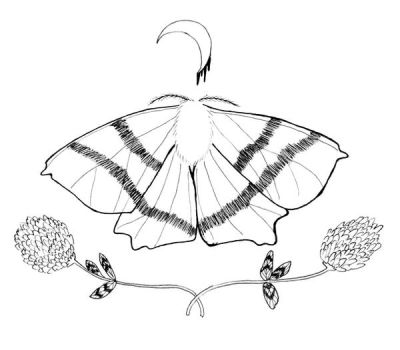 clover and swallowtail moth by starsinmyteacup