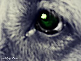 That One Eye Through Life Sees It All by forgivenfate