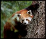buddy, help me get down ... by morho