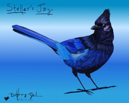 Steller's Jay: Sass me? I'll stab you! by MsJerltheScienceGirl