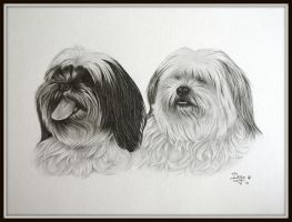 Mixed breed in graphite by IngeLammers