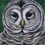 Barred Owl by HouseofChabrier