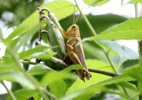 Differential grasshopper by firefox2171