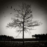 Lonely Tree by Seetho