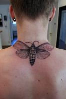 Carpenter Moth by Nis-Staack
