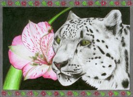 Snow Leopard by Milanthis