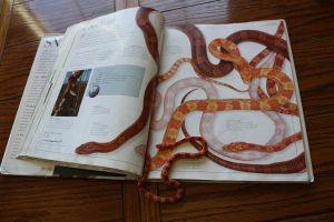 Corn Snakes by icantthinkofaname-09