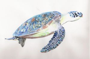 Turtle by rikstal