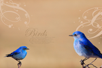 Blue Bird Wallpaper by Little-Tinkerbell-x