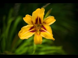 A splash of Yellow by GMCPhotographics