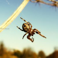 The Web Maker.1 by EmilieDurand