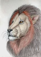 Lion by Narncolie