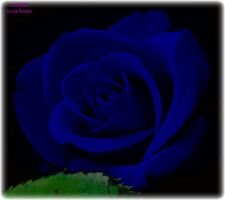 Blue PS Rose by panda69680102