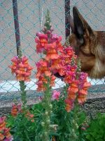 Dog and flowes by Alcyone07