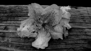 Flower On Wood Table by PamplemousseCeil