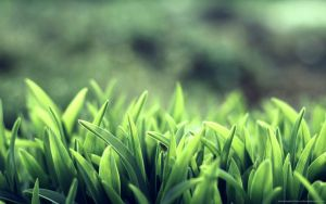 beautiful green gras by Guilherme-Freitas
