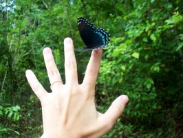 Red Spotted Purple by SaritaWolff