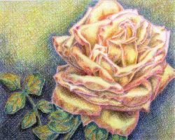 Crosshatch Rose by Lexi008