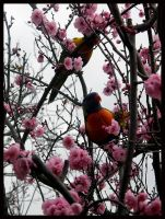 Birds Love Sakura - 10 by Lilithia