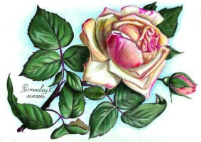 Rose from a postcard by Rustamova