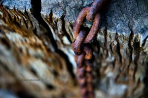 Metal and Wood by EvanXethTideswell