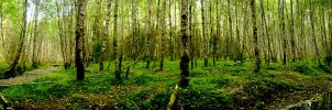 Forest of the Alders by Draco-Vetus