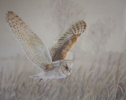 Barn owl by Val-Hayward-Art