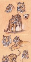 Tiger Study by KerriAitken