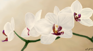 = Orchids = by FlyBeyondTheClouds