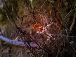 Dead apple blossom by Shady081988