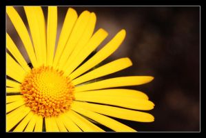 Yellow by medveh